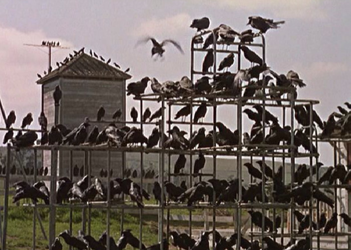 Alfred Hitchcock's The Birds (1963)
